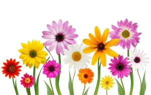 spring-flower-pictures-free