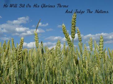 cornfield-599108_1280