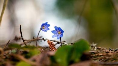 flower-546278_1280