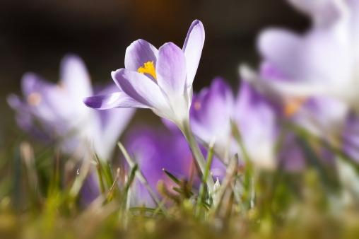 spring-664410_1280