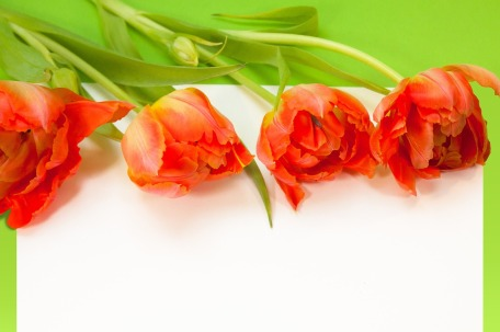 tulips-661884_1280