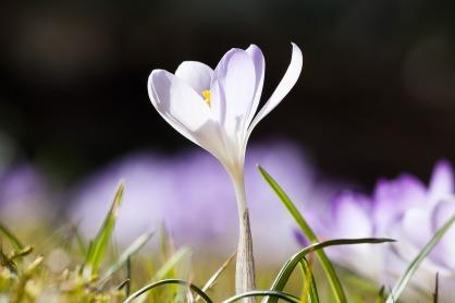 spring-664406_1280