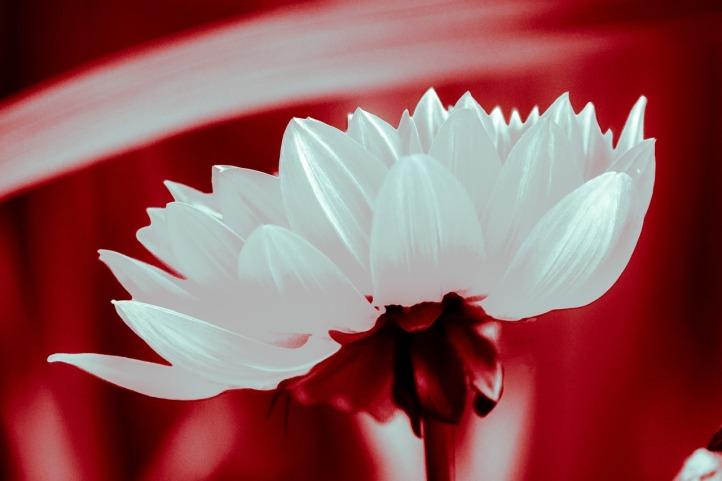 flower-594774_1280 (1)