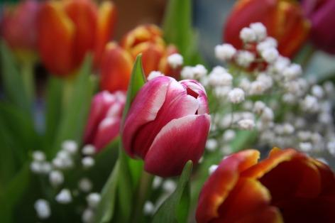 tulips-624779_1280