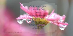 flower-871999_1280